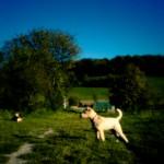 Raising Pinhole Wide V - Hund